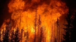 beetle-kill-forest-fire.jpg - Primorye24.Ru